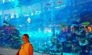 Dubai mall sea aquarium (2)