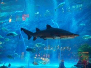 Dubai mall sea aquarium