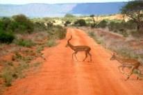 Kenia Tsavo East national park