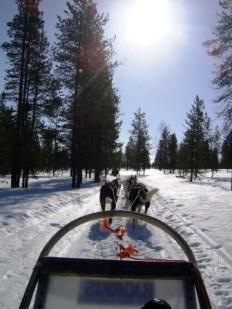 Lapland dogsled ride
