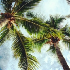 Thailand palm trees