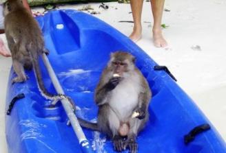 Thailand Ton Sai Bay beach monkey's