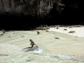 Thailand Ton Sai Bay monkey beach