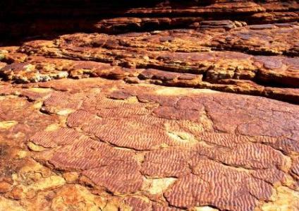 Australia Kings Canyon lake fossils