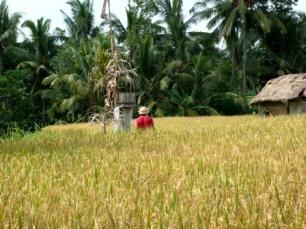 Bali Ubud (2)