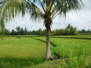Bali Ubud views