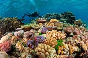 Australia Great Barrier Reef diving