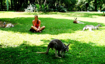 Australia Zoo kangaroo area