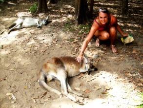 Australia Zoo kangaroo feeding