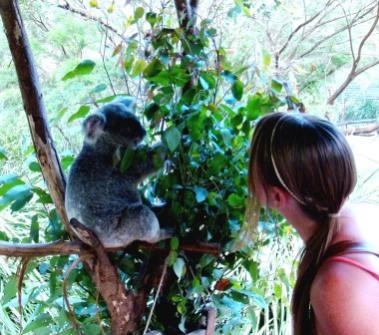 Australia Zoo patting koalas