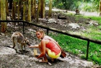 Australia Zoo wallaby feeding