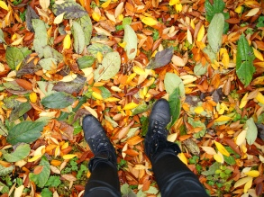 Autumn leaves from where I stand