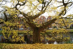 Botanical Gardens Leiden