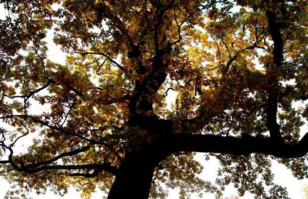 Autumns foliage