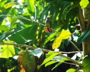 Costa Rica Azánia tropical surroundings (2)