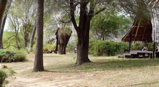 Kenya Galdessa eco lodge animal roaming free