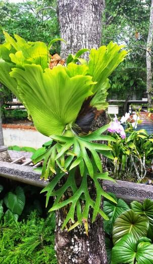 Phuket Ananta Thai Pool villas resort surroundings (3)