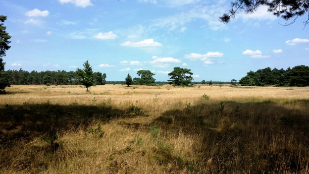 Perfect quiet nature views and picnic areas