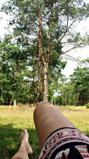 Chilling on the Dutch Veluwe (2)