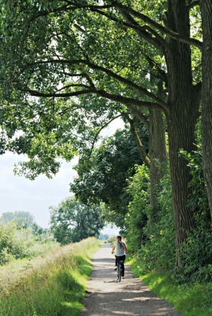 Cycling on de Veluwe in Holland (2)