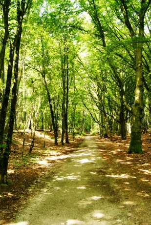 Forests of de Veluwe in Holland (2)