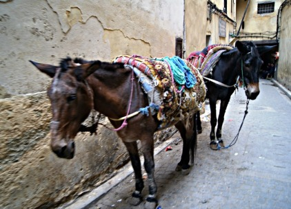 medina-streets-of-fes-morocco-4